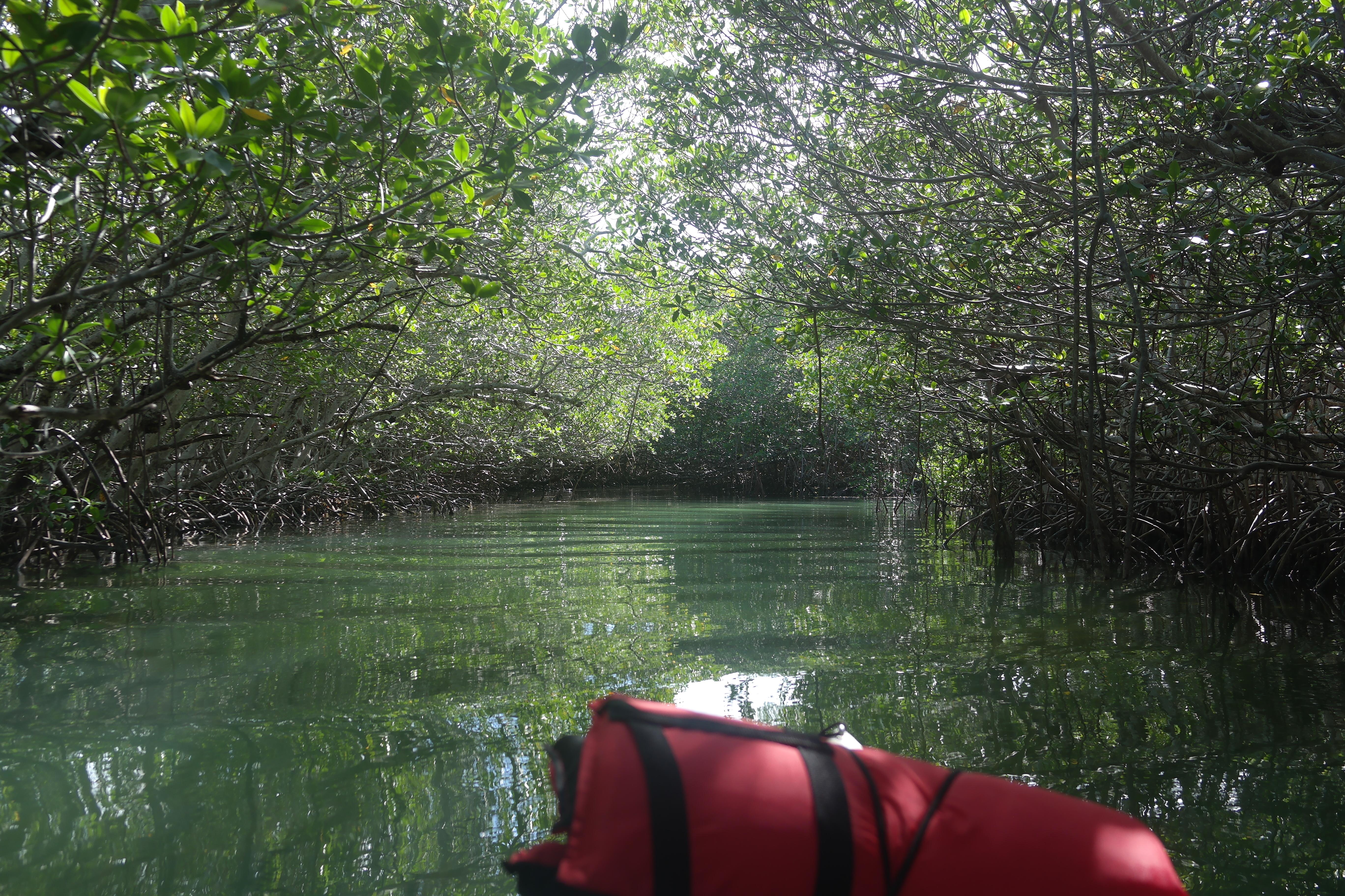 Mangrove Tunnels Islamorada