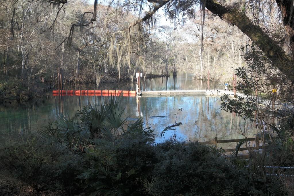 Fanning Springs