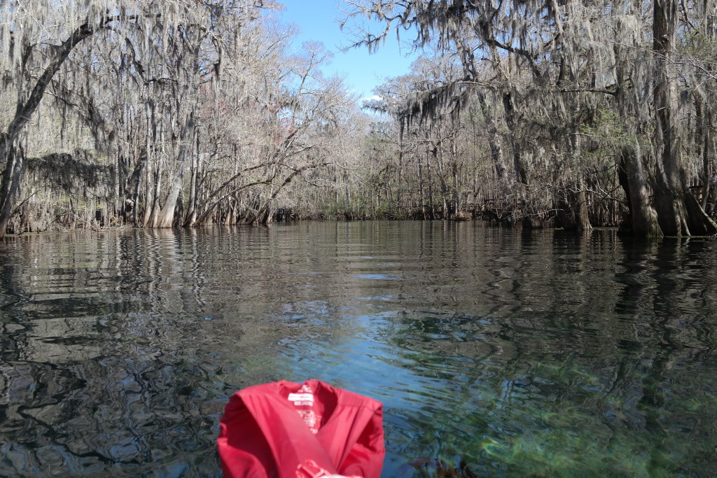 Manatee Springs Kayaking