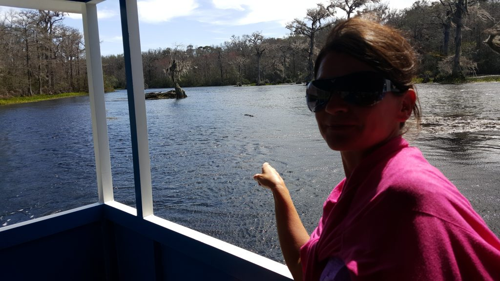 Alligator Wakulla Springs